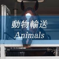 大栄社 動物輸送